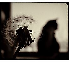 moments Photographic Print