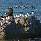 Seal hanging out with a flock of seagulls by mechelle142