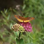 Butterfly in The Pink by Rick  Friedle