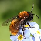 Bee-holding beauty by Rivendell7