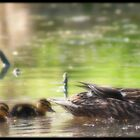 Learning to  Swim  by vince dwyer