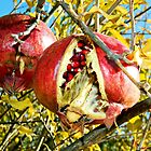 Pomegranate #1 by Julie Sleeman