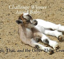 Challenge Winner - Aww Baby by quiltmaker