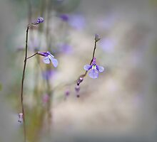 Native Lobelias by Dianne English