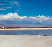 Cejar Pond - Atacama Desert - Chile by parischris