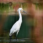 Great Egret  by Saija  Lehtonen