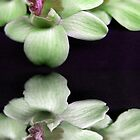 Green Orchids by Beth A