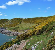 Gorse Bushes on the All Wales Coast Path by Paula J James