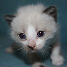 Cute kitty by garigots