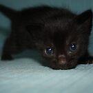 Cute black kitty by garigots