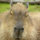 Capybara by Fattom25