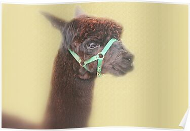 Alpaca - Brown - by Evita