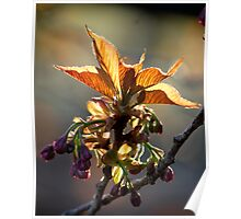 Leaf Protector at Sunset Poster