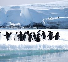 Adelie Penguin Group - Antarctica by cactus82