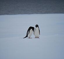 Antarctic Penguin Pair by cactus82