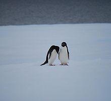 Antarctic Penguin Pair by cactus82