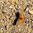 Variegated Fritillary Butterfly by aprilann