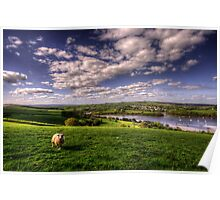 Dart valley Sheep Poster