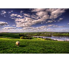 Dart valley Sheep Photographic Print