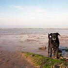 Shela on Llanfairfechan beach. by Michael Haslam