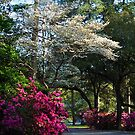 The Garden Path by Kathy Baccari