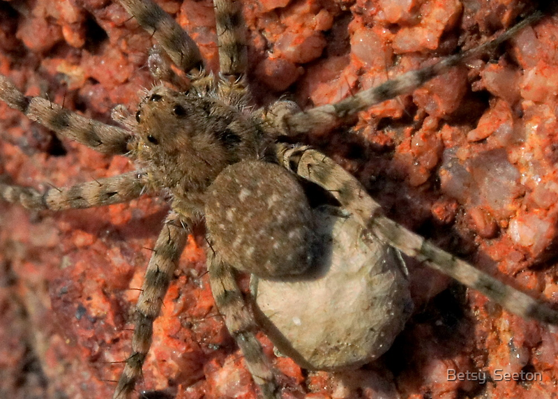 Mama Spider by Betsy  Seeton