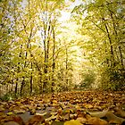 The Autumn Path by Jane Keats
