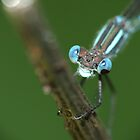 Blue Damsel by Gabrielle  Lees