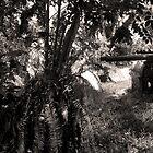 12.7-cm Japanese Anti-Aircraft Gun - Pohnpei, Micronesia by Alex Zuccarelli
