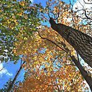 Colorful Autumn Treetop Canopy by CuteNComfy