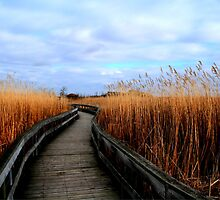 A Walk through the Phragmites by Larry Trupp