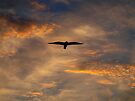 Seagull in clouds by geophotographic