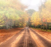 Autumn Road - Mount Wilson NSW Australia - The HDR Experience by Philip Johnson