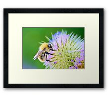 A prickly situation Framed Print
