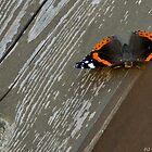 Butterfly by GeorgeGrivas