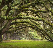 Avenue of Oaks - Charleston SC Plantation Live Oaks by Dave Allen