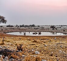 Waterhole in Etosha National Park/ Namibia 1 by globeboater
