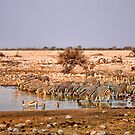 Waterhole in Etosha National Park/ Namibia 2 by globeboater