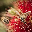 Beez by Randy Turnbow