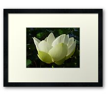 Profile of Lotus in Full Bloom Framed Print