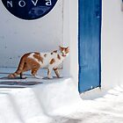 Cat in Mykonos by Laura Melis