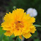 Bug Heaven by Sandra Fortier