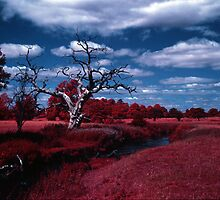 Dead tree by David Cooper