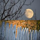 As the Moon Rises. by Kristi Fiske