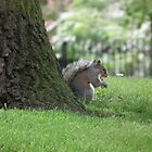 Squirrel By a Tree by MyPixx