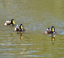 Here Come The Ducks In The Hood by TheaShutterbug