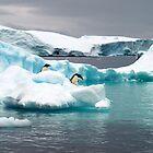Wildlife of Antarctica by geophotographic