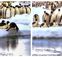 Emperor Penguins Going Fishing Sequence by Carole-Anne