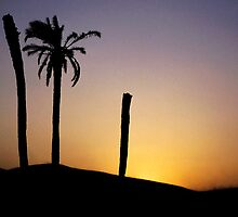 Silhouetted palm trees at sunset in the Sahara Desert by Sami Sarkis