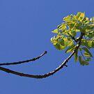 Just A Tree ~ by Renee Blake